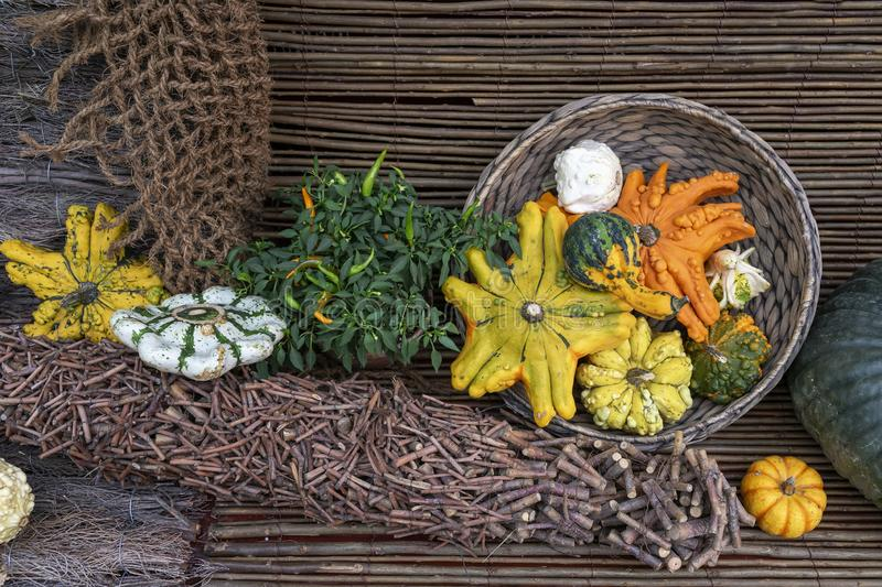 Autumn still life with assorted pumpkins, skwoshes, patty pan on rustic wooden background. Thanksgiving and Halloween stock photo