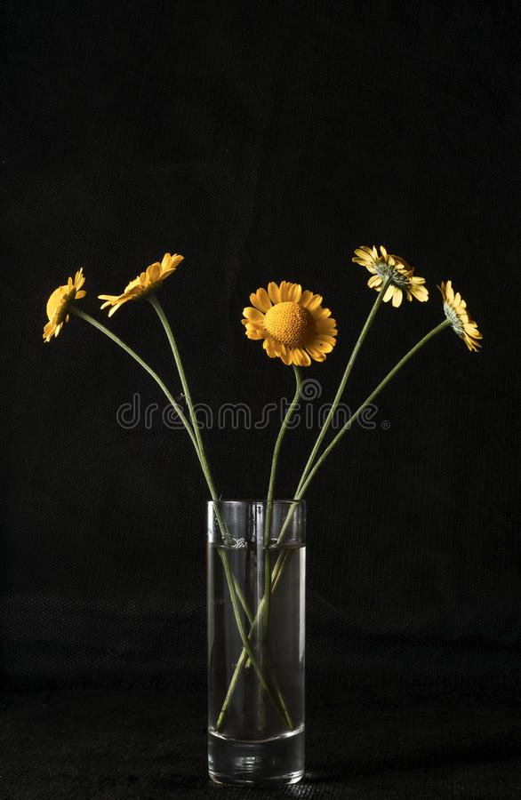 Autumn still life. The belly button is tinted in a glass goblet. Five flowers in a glass on a dark background royalty free stock image