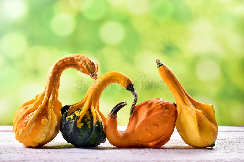 Autumn still life with decorative gourds. Autumn still life with beautiful decorative gourds for thanksgiving stock photography