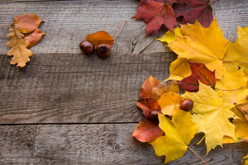 Autumn still life. Dry leaves on wooden board. Top view. Flat lay and copy space. royalty free stock images