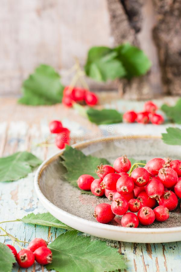 Autumn still life. Harvest of hawthorn berries with leaves. On a plate on a rustic background stock image