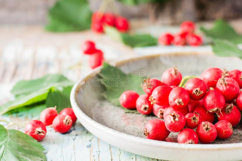 Autumn still life. Harvest of hawthorn berries with leaves. On a plate on a rustic background stock images