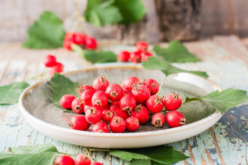 Autumn still life. Harvest of hawthorn berries with leaves on a plate. On a rustic background royalty free stock image