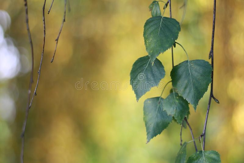Autumn. Still life with leaves stock photos