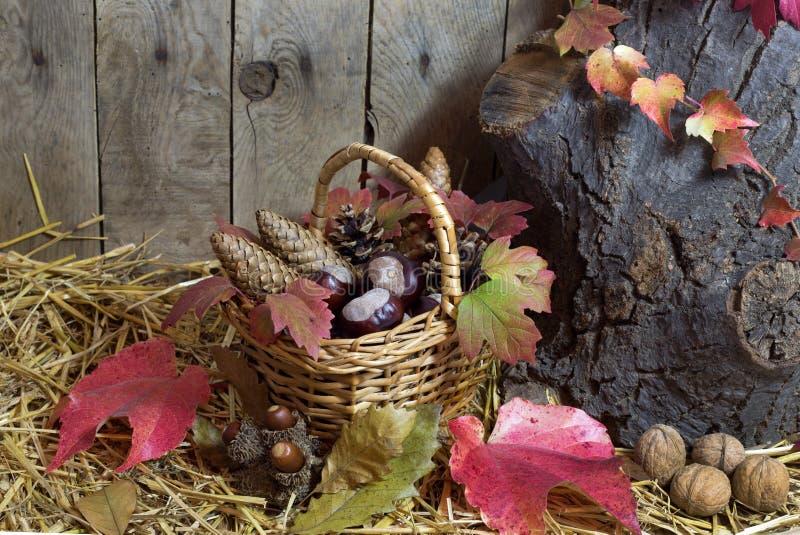 Autumn Still Life mit dem Weidenkorb gefüllt mit Kiefern-Kegeln, Eicheln, Kastanien, rotem Autumn Leaves und Nüssen auf einem Heu lizenzfreie stockfotografie