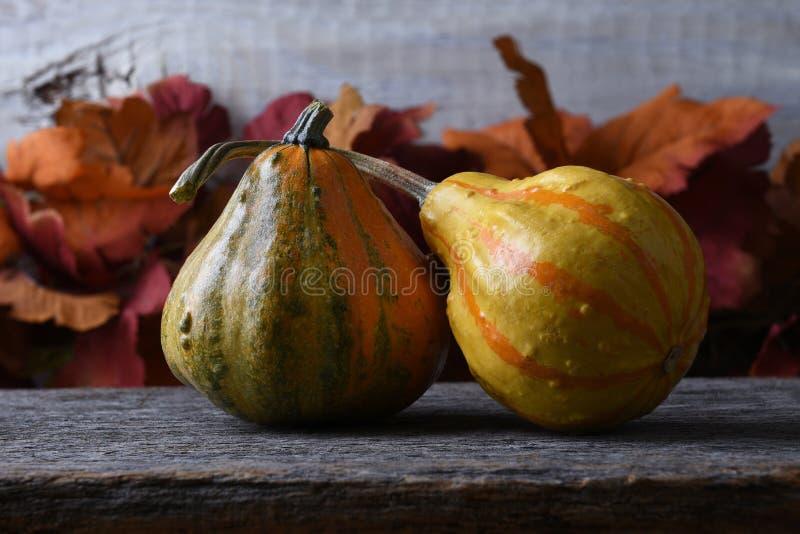 Autumn Still Life mit zwei Kürbissen und Fallblättern stockfoto