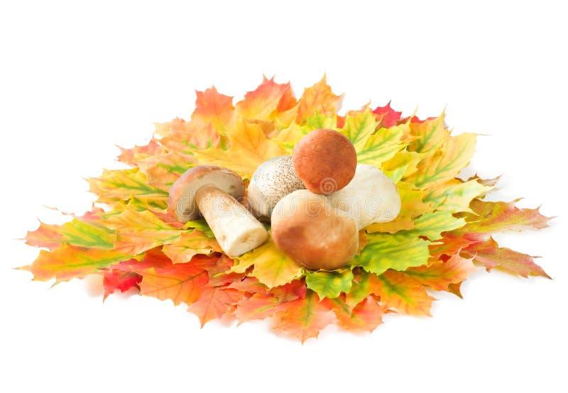 Autumn still-life. Mushroom crop on autumn leaves on a white background stock image