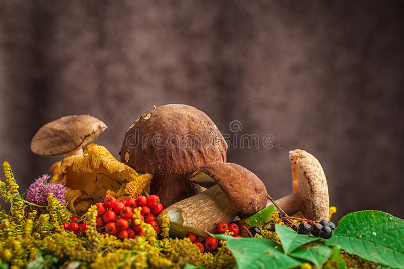 Autumn still life of mushrooms. A beautiful still-life from natural large white mushrooms, orange leaves of mountain ash, green leaves, paportnikov and other royalty free stock photography