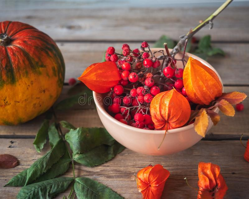 Autumn still life with pumpkin, rowan and physalis in a ceramic arrow in orange tones royalty free stock image