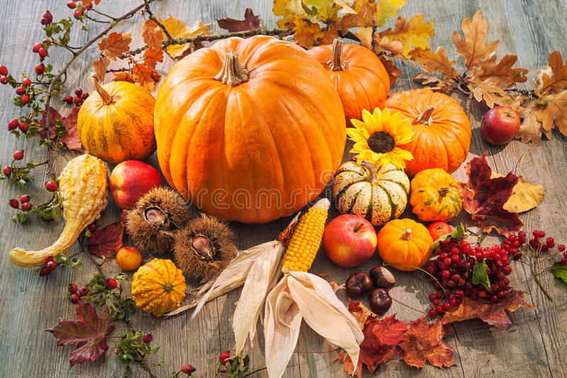 Autumn still life with pumpkins, corn cobs and berries royalty free stock images