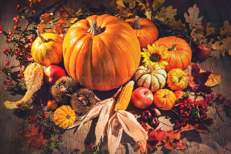 Autumn still life with pumpkins, corn cobs and berries stock photo