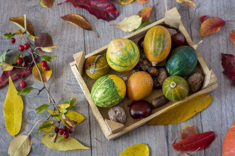 Autumn still life with pumpkins and leaves on old wooden background.shallow depth of field royalty free stock image