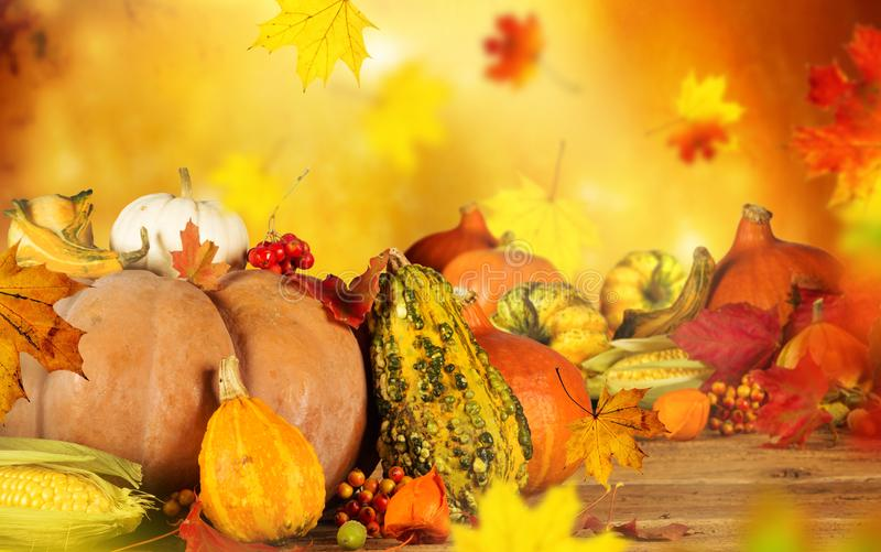 Autumn still-life with pumpkins and leaves. royalty free stock photo