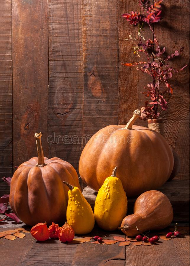Autumn still life with pumpkins, leaves, rosehip berries and physalis against the background of old wooden wall stock photo
