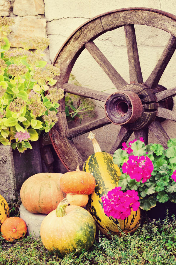 Autumn still life with pumpkins in rustic style stock photography