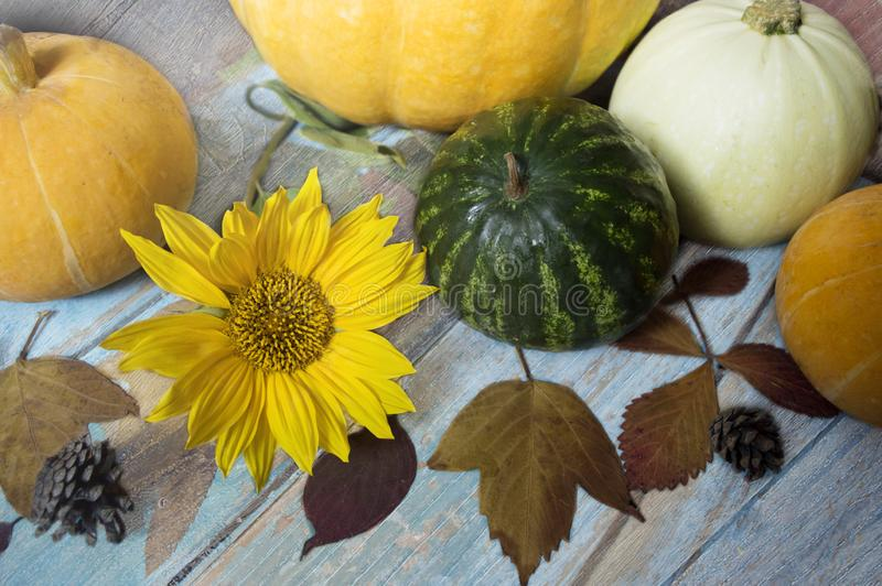 Autumn still life with pumpkins, watermelon and leaves on a wooden background stock photography