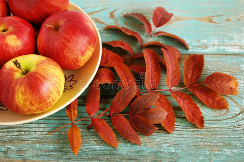 Autumn still life with red and yellow apples on a ceramic plate and dry eaves of rowan on the turquoise wooden background. stock photography