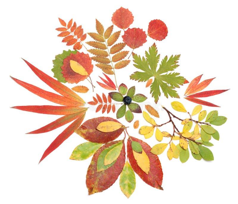 Autumn still life from sheet royalty free stock image