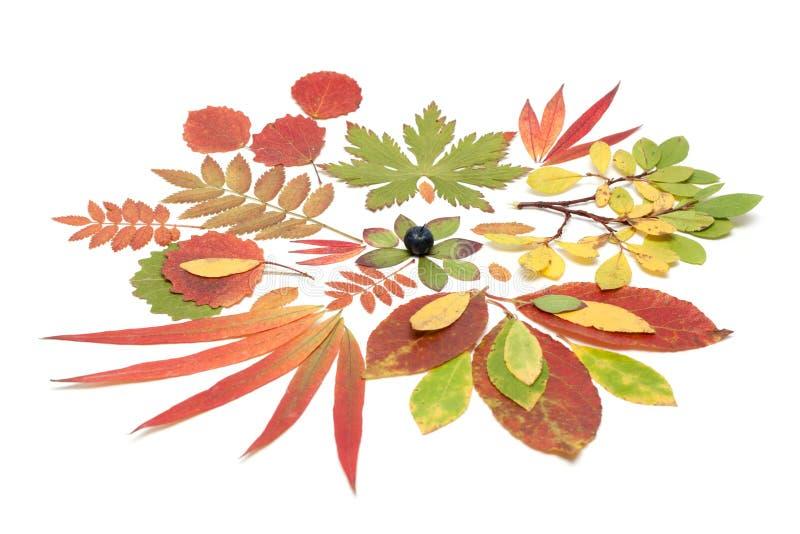 Autumn Still Life From Sheet Stock Photography