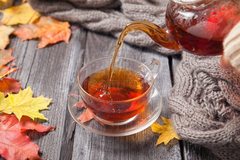 Autumn Still Life: Tea on maple leaves on a wooden table stock image
