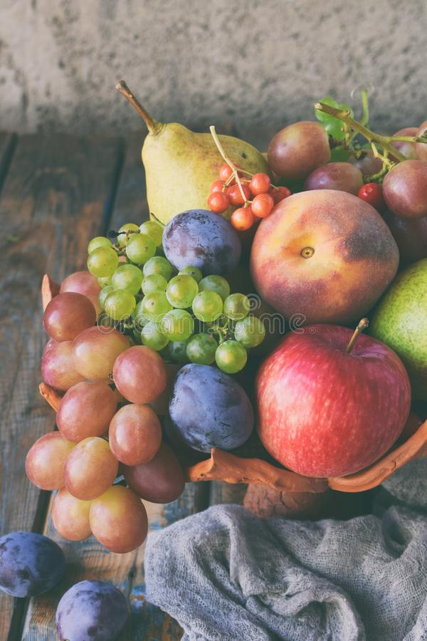 Autumn still life for thanksgiving with autumn fruits and berries on wooden background - grapes, apples, plums, viburnum, dogwood. stock image