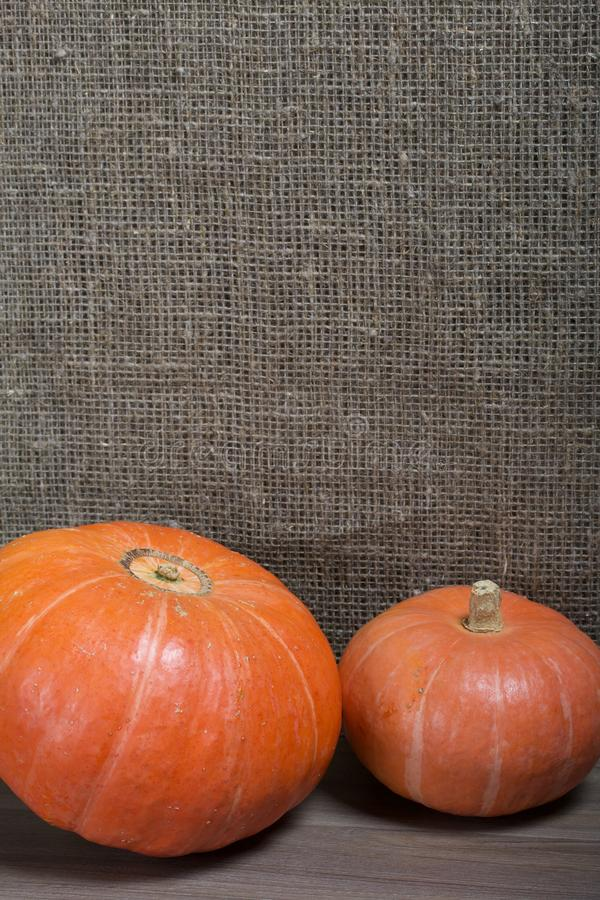 Autumn still life. Two orange pumpkins on a background of rough linen cloth royalty free stock image