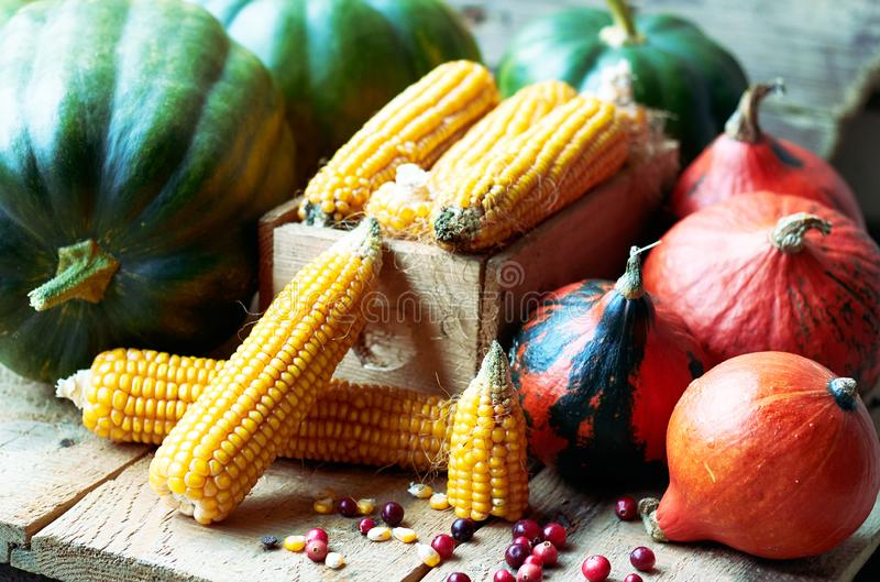 Autumn still life from variety of pumpkins, corn, grain and cranberry berries royalty free stock photo
