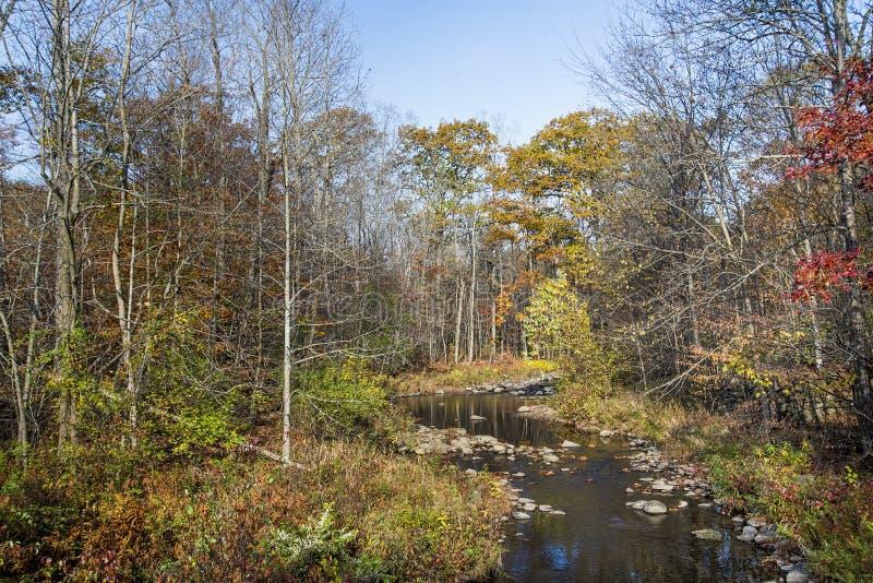 Autumn Stream fotografia stock libera da diritti
