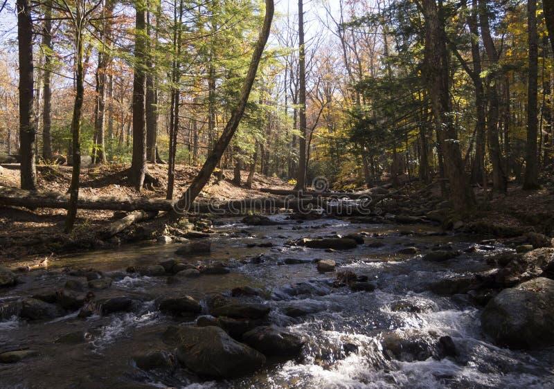 Autumn Stream fotografía de archivo