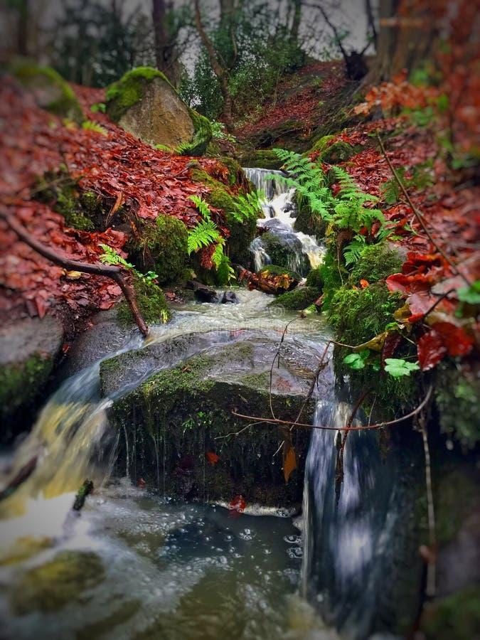 Autumn Stream imagem de stock