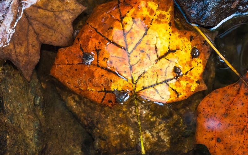 Autumn Stream immagini stock