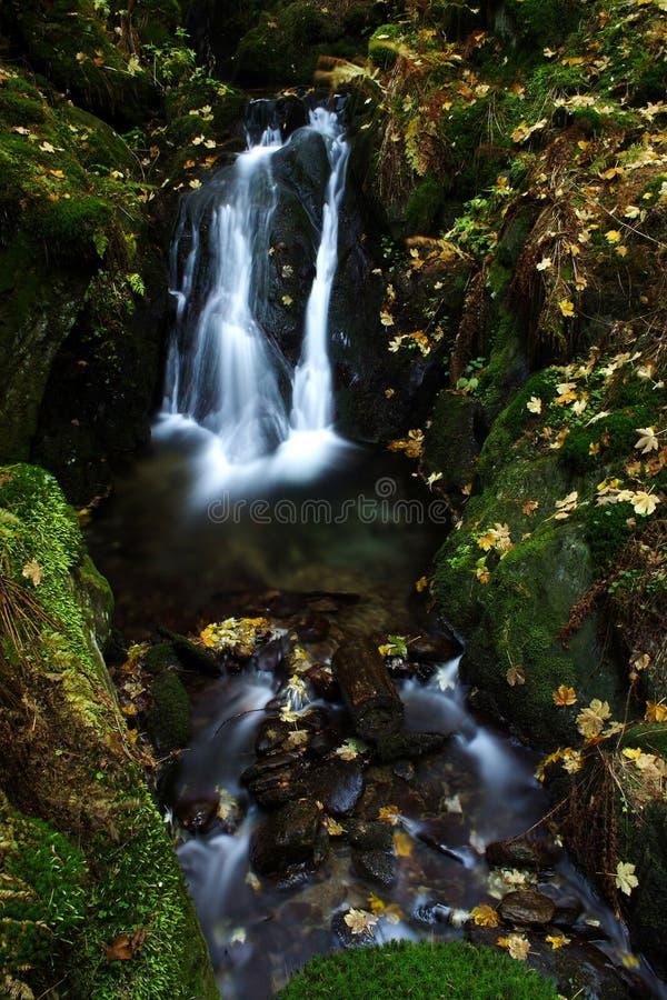 Autumn stream in Giant mountains royalty free stock image