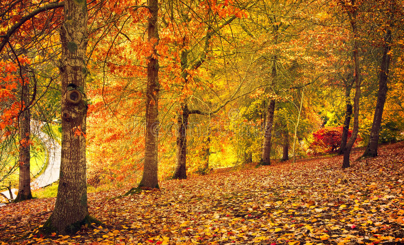 Autumn Stroll royalty-vrije stock afbeeldingen