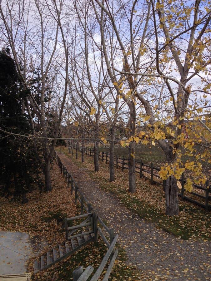 Autumn Stroll fotos de stock