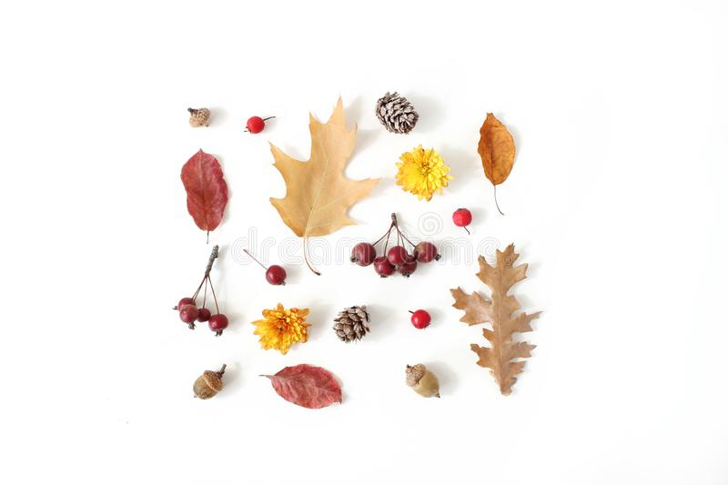 Autumn styled botanical arrangement. Composition of acorns, pine cones, colorful dried oak leaves, little apples and stock photo