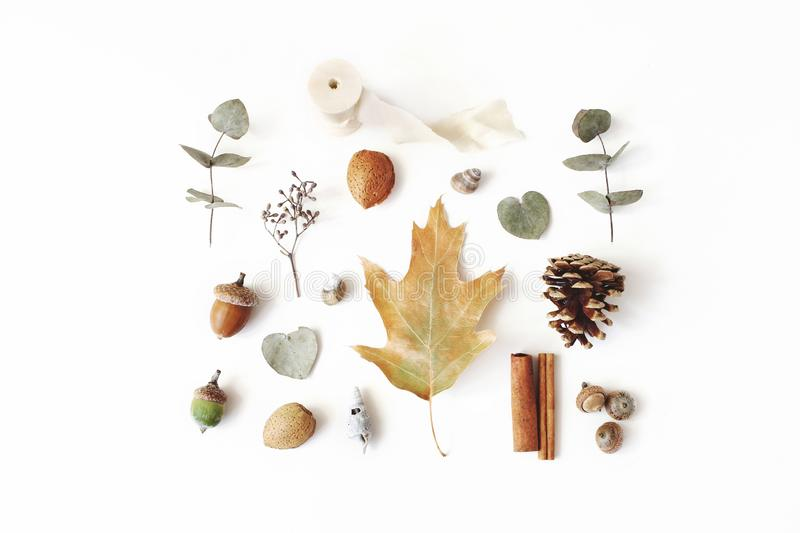 Autumn styled botanical arrangement. Composition of acorns, pine cones, dried eucalyptus and oak tree leaves and stock photography