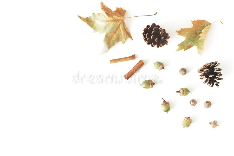 Autumn styled botanical arrangement. Composition of oak acorns, pine cones, dried maple, plane tree leaves and cinnamon stock photography