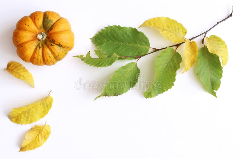 Autumn styled photo .Background of colorful autumn pumpkins and leaves, fall season concept,flat lay, top view stock photography