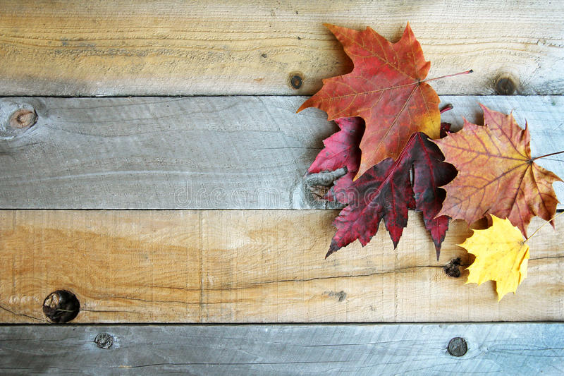 Autumn Sugar Maple Leaves Framing Rustic-Holz-Hintergrund lizenzfreie stockbilder