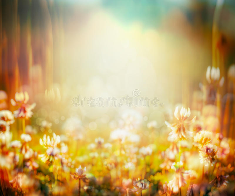 Autumn or summer blurred nature background with flowers field and sunset light. Toned stock photography