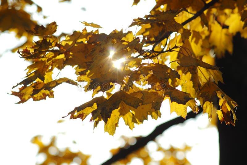 Autumn Sun imagem de stock royalty free