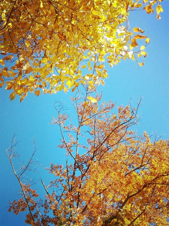 Autumn Sun foto de archivo