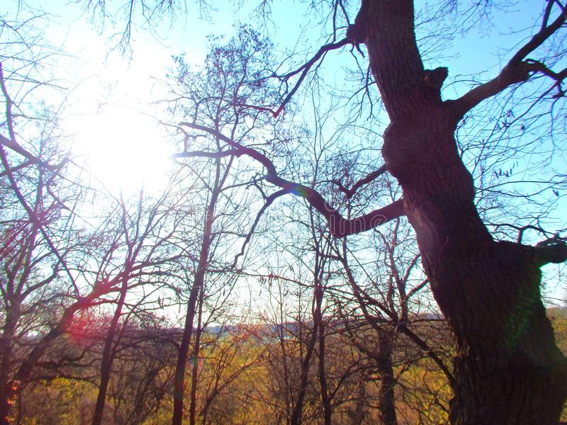 Autumn sun through the bare branches of trees. Autumn sun thanks for the day, evening sun thanks for fatigue royalty free stock images