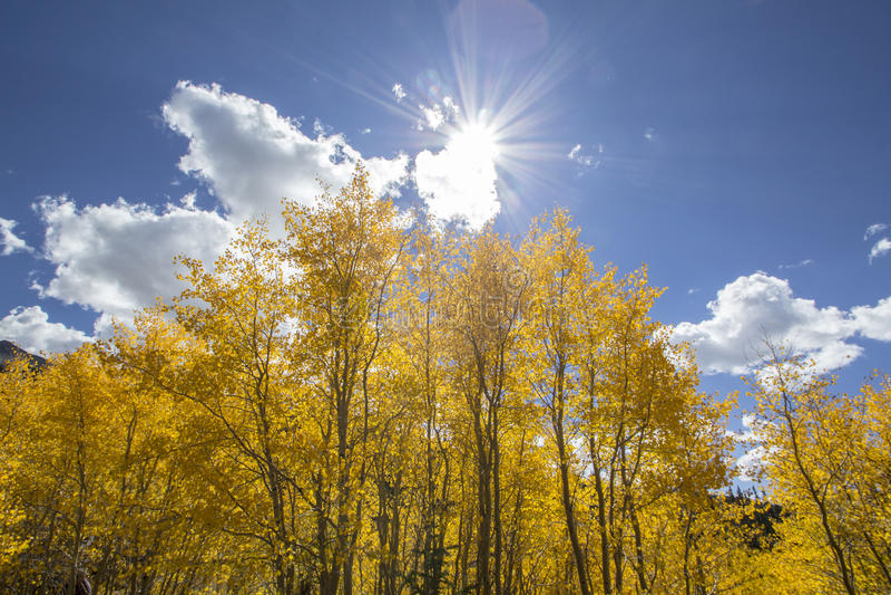 Autumn Sun Break royaltyfri foto