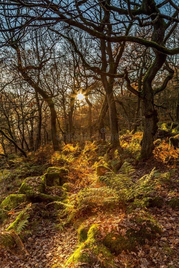 Autumn Sun Rays fotografia stock