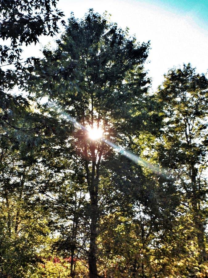 Autumn Sun Through The Trees Free Public Domain Cc0 Image