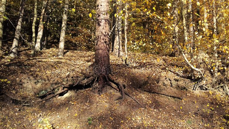 Autumn Sun Wald in der Sonne Herbstlicher melancholischer Tag Später Fall stockfoto