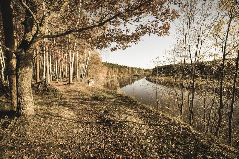 Autumn in sunny day in park with distinct tree trunks and tourist trails - vintage retro look. Autumn in sunny day in park with distinct tree trunks and tourist royalty free stock photo
