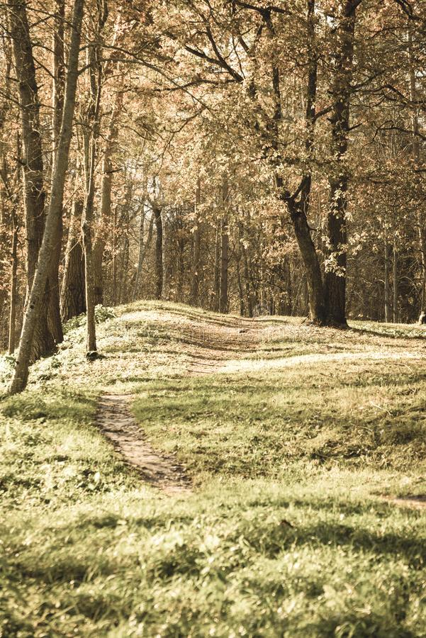 Autumn in sunny day in park with distinct tree trunks and tourist trails - vintage retro look. Autumn in sunny day in park with distinct tree trunks and tourist royalty free stock photography