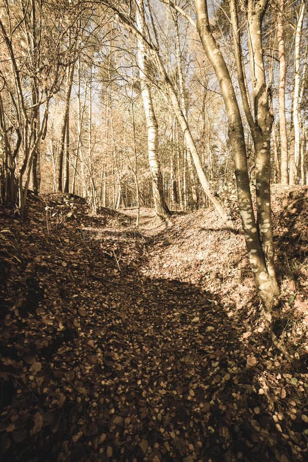 Autumn in sunny day in park with distinct tree trunks and tourist trails - vintage retro look. Autumn in sunny day in park with distinct tree trunks and tourist royalty free stock photos